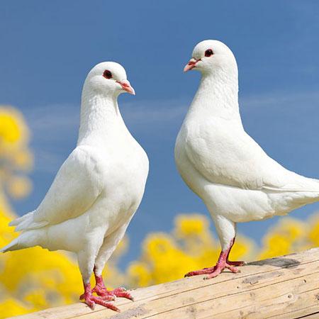 ויטמינים לעופות ויונים