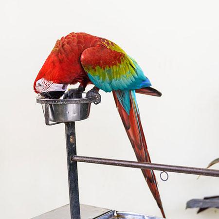 כלי אוכל ומים לתוכים וציפורים
