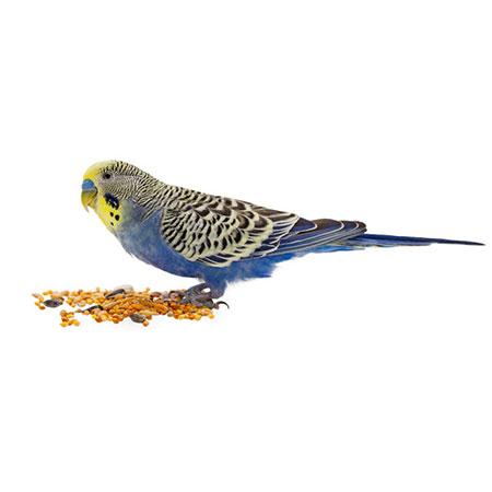 מזון לציפורים