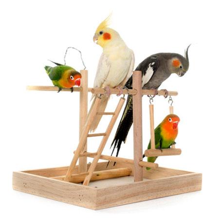 צעצועים ומשחקים לתוכים וציפורים