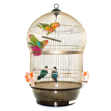 כלובים לתוכים וציפורים