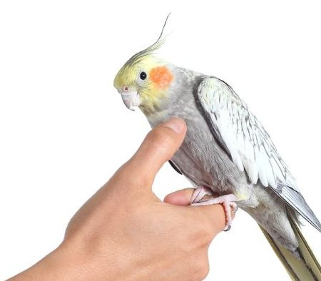 כלובים לתוכי האכלת יד